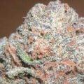 Does High-Potency Marijuana Cause Brain Damage?